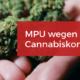 MPU wegen Cannabiskonsum Drogen Gutachten MPU